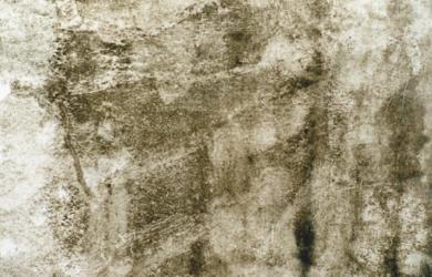 mancha de caruncho