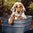 Higiene do seu animal de estimação