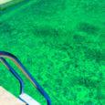 Limpeza de agua verde de piscinas