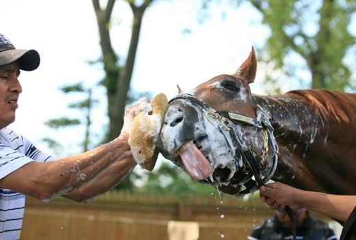 limpeza-cavalo