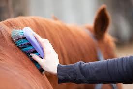 limpeza-cavalos2