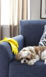 3 dicas para remover pêlos de animais do tecido do sofá